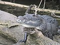Belize Guatemala 2010 601.jpg