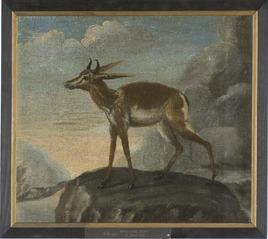Bengalisk hjort
