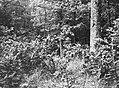Beschadigd, Bestanddeelnr 194-1234.jpg