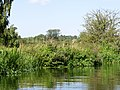 Between Wansford and Wansford Lock on the Nene - August 2013 - panoramio.jpg