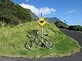Bicycle Rentals (32787183841).jpg