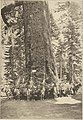 Big Trees of California Southern Pacific (1913) (14784590445).jpg