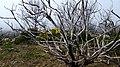 Biosphere Reserve La Gomera 06.jpg