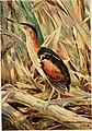 Bird-lore (1919) (14755370515).jpg