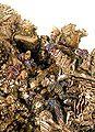 Bismuth-tmix07-182d.jpg