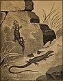 Blätter für Aquarien- und Terrarien-Kunde (1901) (20360405156).jpg