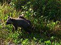 Black Point Wildlife Drive - Flickr - Rusty Clark (14).jpg