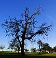 Blue Sky - panoramio (3).jpg