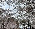 Bojung Cafe street view in Spring.jpg