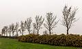 Bomengroep om strandje put van Nederhorst 04.jpg