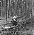 Bosbewerking, arbeiders, boomstammen, werkzaamheden, Bestanddeelnr 251-8482.jpg