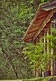 Botânico e Natureza.jpg