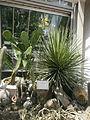 Botanička bašta Jevremovac 055.JPG