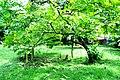 Botanic garden limbe27.jpg