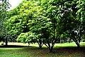 Botanic garden limbe64.jpg