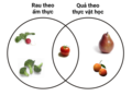 Botanical Fruit and Culinary Vegetables vi.png