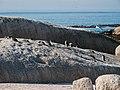 Boulders Beach, Cape Town ( 1050605).jpg