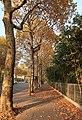 Boulevard Suchet automne, Paris 16e 2.jpg