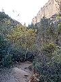 Boynton Canyon Trail, Sedona, Arizona - panoramio (62).jpg