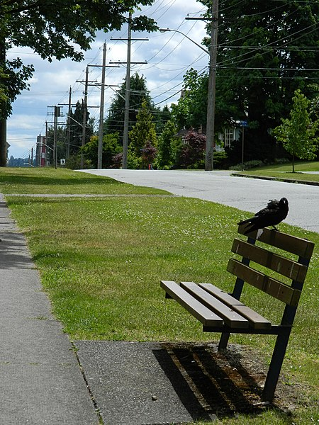 File:Branch on 1st St., New Westminster - panoramio.jpg