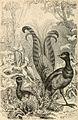Brehms Tierleben; allgemeine kunde des thierreichs. Mit 1910 abbildungen im text, 11 karten und 180 tafeln in farbendruck und holzschnitt. (1893) (14761707256).jpg