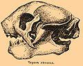 Brockhaus and Efron Encyclopedic Dictionary b40 888-1.jpg