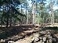 Brownsea Island woodland (33532353750).jpg