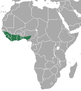 Buettikofer's Epauletted Fruit Bat area.png