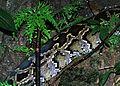 Burmese Python (Python molurus bivittatus) (7807918682).jpg