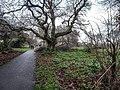 Bushy Park, Dublin -146427 (45754691004).jpg