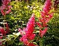 Butchart Gardens - Victoria, British Columbia, Canada (29240012525).jpg