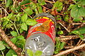 Butterfly on bottle at Shaugh Bridge (5142).jpg
