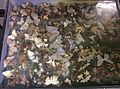 Butterfly wall at Birmingham Museum Collection May 2015.jpg