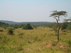 Bwindi Impenetrable National Park - Bwindi Impenetrable National Park.