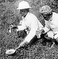 COLLECTIE TROPENMUSEUM Twee mannen onderzoeken een anophelesbroedplaats in een verwaarloosd rijstveld in verband met malaria TMnr 10006682.jpg
