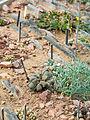 Cacti (14749083408).jpg