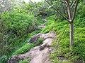 Camino por el barranco de Azuaje 3 - panoramio.jpg