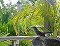 Caneel Bay Bird 1 B.jpg