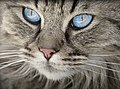 Cat-1508613 340.jpg