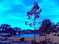 Celeste Parque F. D. Roosvelt.jpg