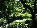 Central Park, New York, NY, USA - panoramio (33).jpg