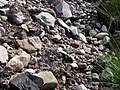 Chaotic jumble of rocks and gravel - geograph.org.uk - 506349.jpg