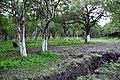 Chapotal - panoramio.jpg