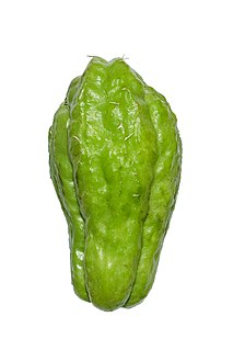 Chayote plant of the gourd family and its edible fruit, originally native to Mesoamerica