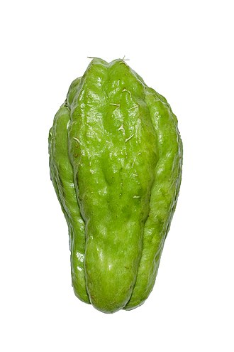 Chayote - Chayote fruit