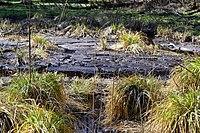 Cherevakha Manevytskyi Volynska-Urochyshche Dzherela nature reserve-source leak-1.jpg