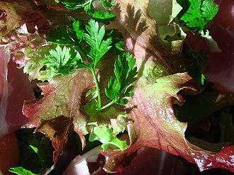 Fines herbes - Image: Chervil