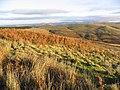 Cheviot Hillside - geograph.org.uk - 290424.jpg