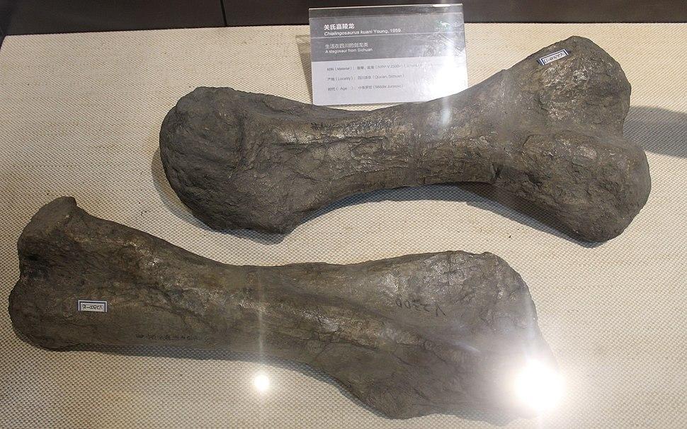 Chialingosaurus-Paleozoological Museum of China