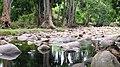 Chinnar River - panoramio.jpg
